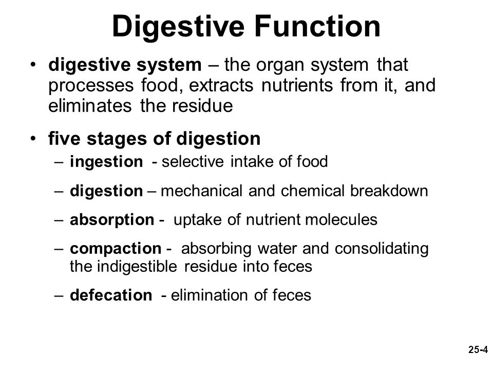 Digestive system study outline