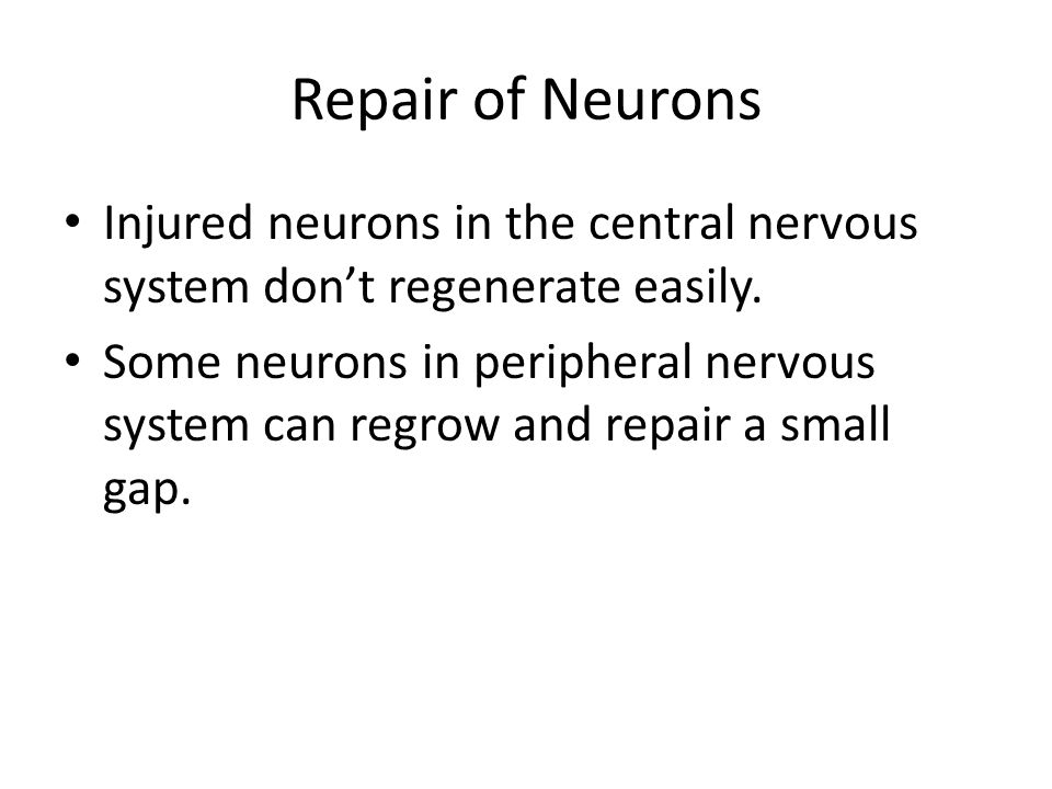 Repair of Neurons Injured neurons in the central nervous system don't regenerate easily.