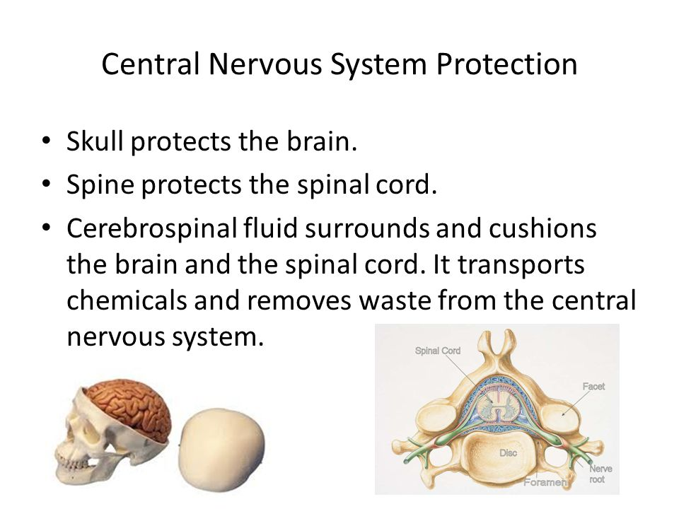 Central Nervous System Protection