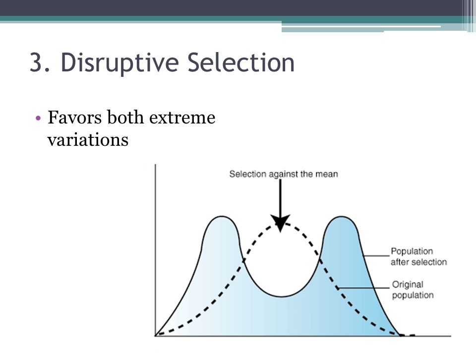3. Disruptive Selection Favors both extreme variations