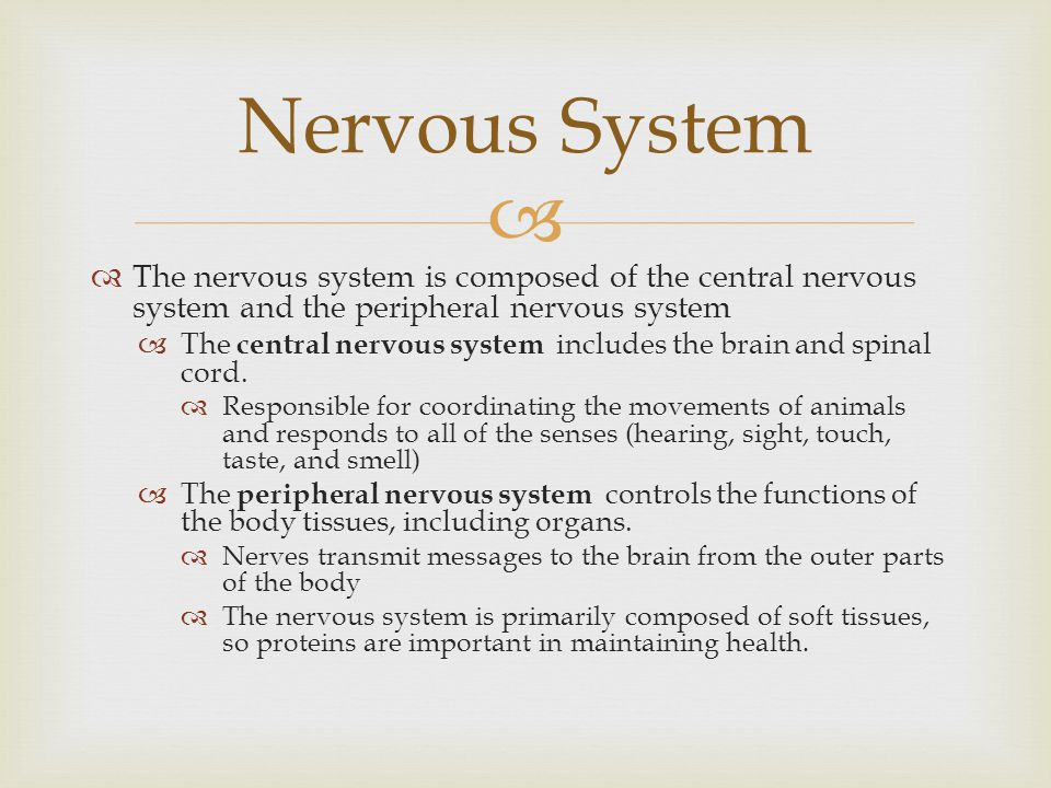 Nervous System The nervous system is composed of the central nervous system and the peripheral nervous system.