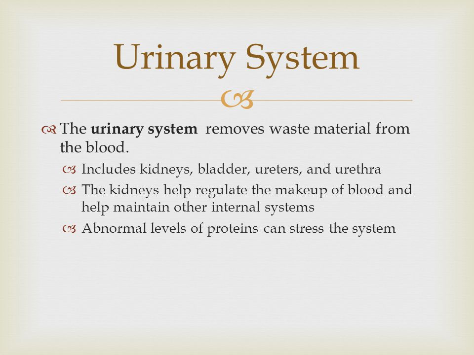 Urinary System The urinary system removes waste material from the blood. Includes kidneys, bladder, ureters, and urethra.