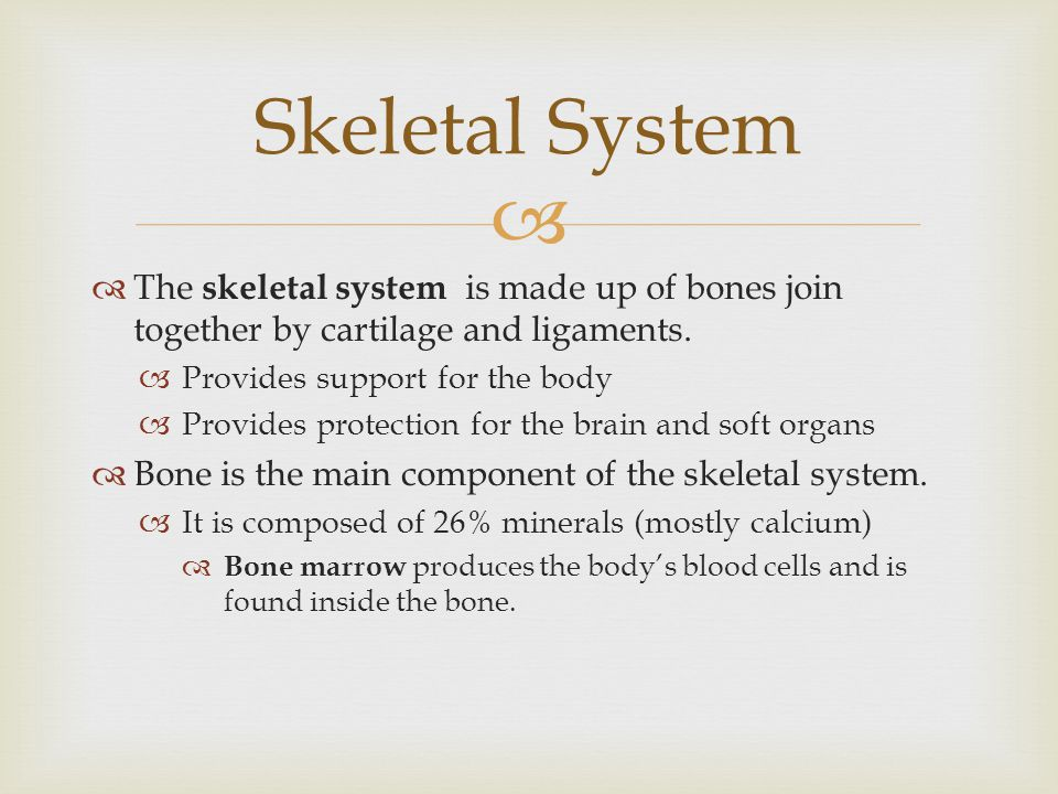 Skeletal System The skeletal system is made up of bones join together by cartilage and ligaments. Provides support for the body.