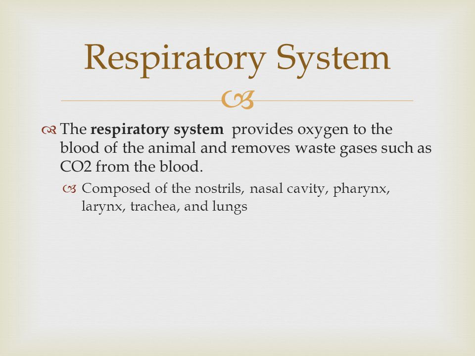 Respiratory System The respiratory system provides oxygen to the blood of the animal and removes waste gases such as CO2 from the blood.
