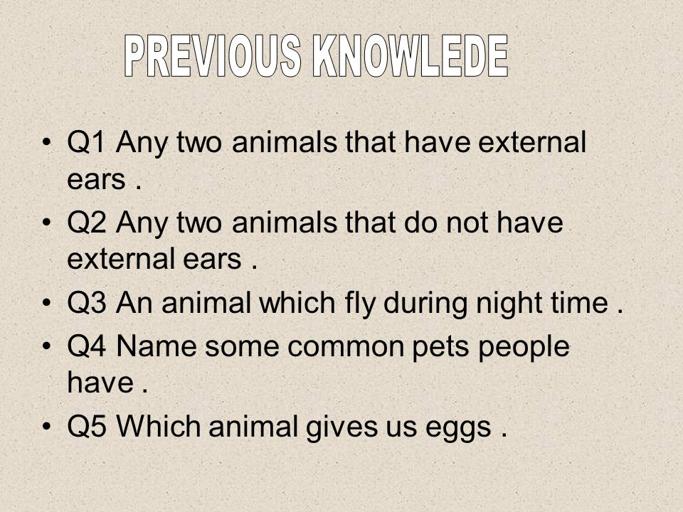 PREVIOUS KNOWLEDE Q1 Any two animals that have external ears . Q2 Any two animals that do not have external ears .