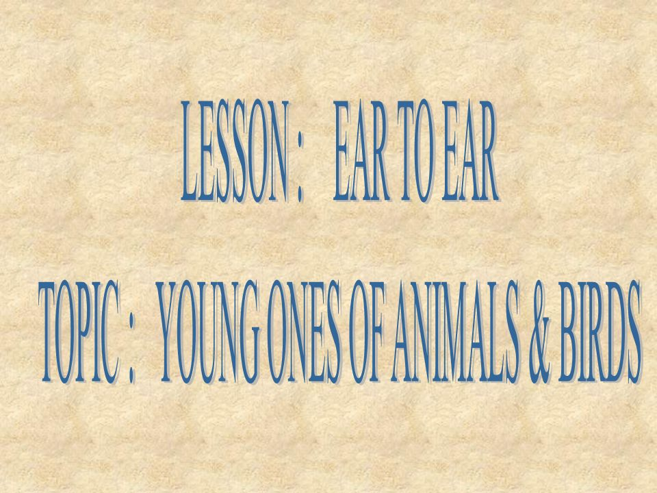 TOPIC : YOUNG ONES OF ANIMALS & BIRDS