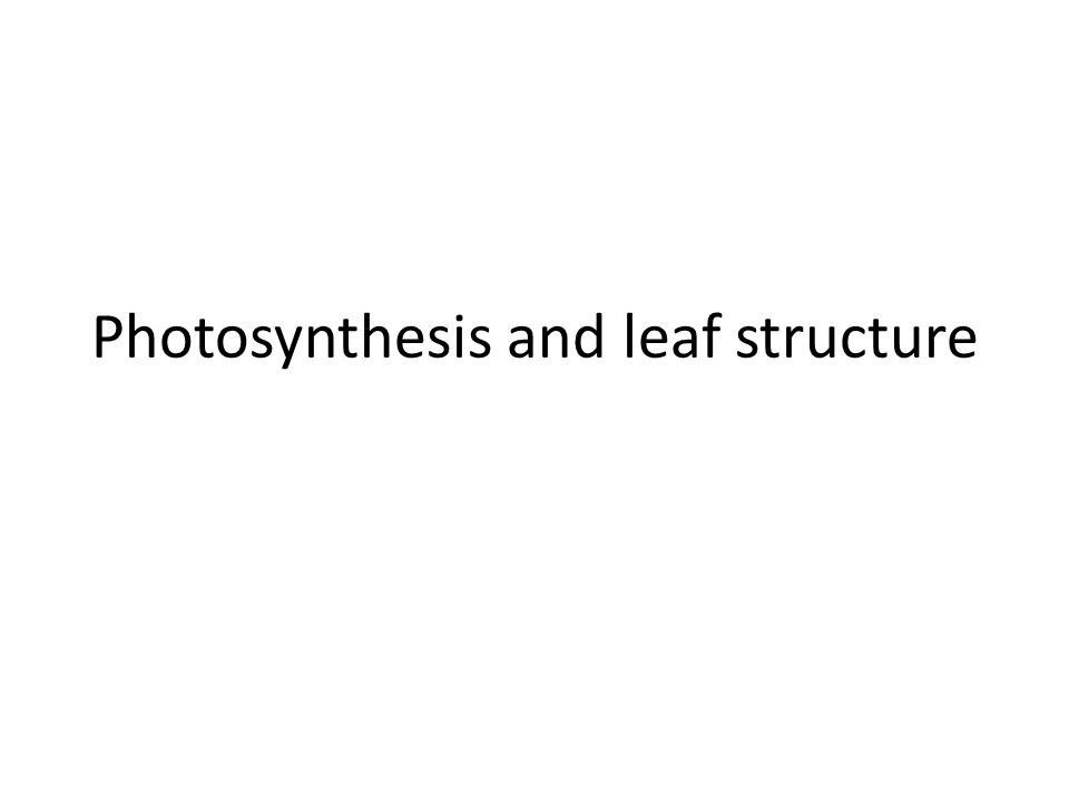 Photosynthesis and leaf structure