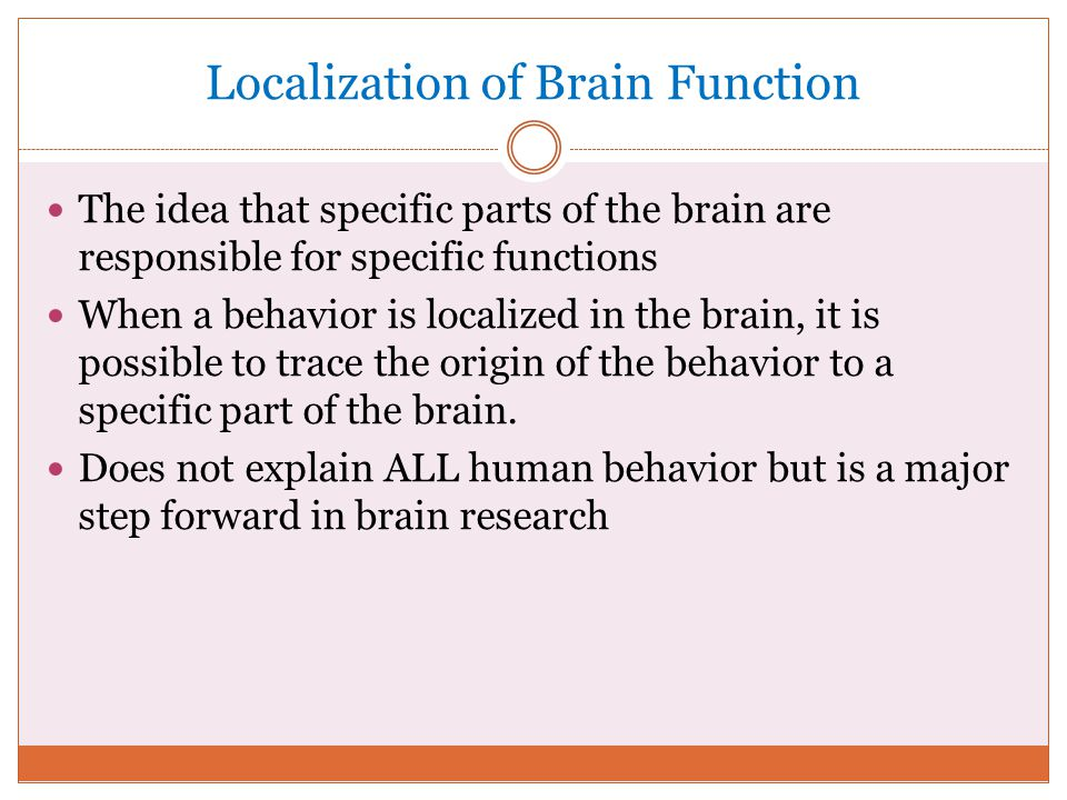 localization function in the brain The term brain lateralization, or lateralization of brain function, means that the different halves do things differently the brain's hemispheres a deep groove called the longitudinal fissure separates the brain into its two hemispheres (halves) the two.