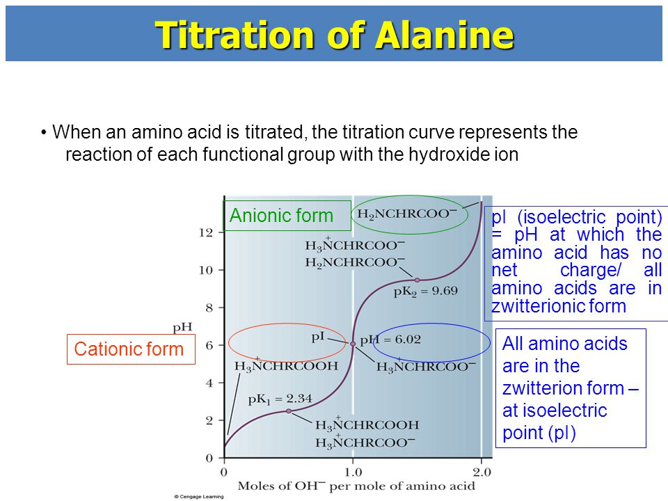titration of amino acids essay In this practical the acid-base behavior of amino acids was assessed amino acids are empathetic they have the basic (amine) and the acidic (carboxylic) functional groups.