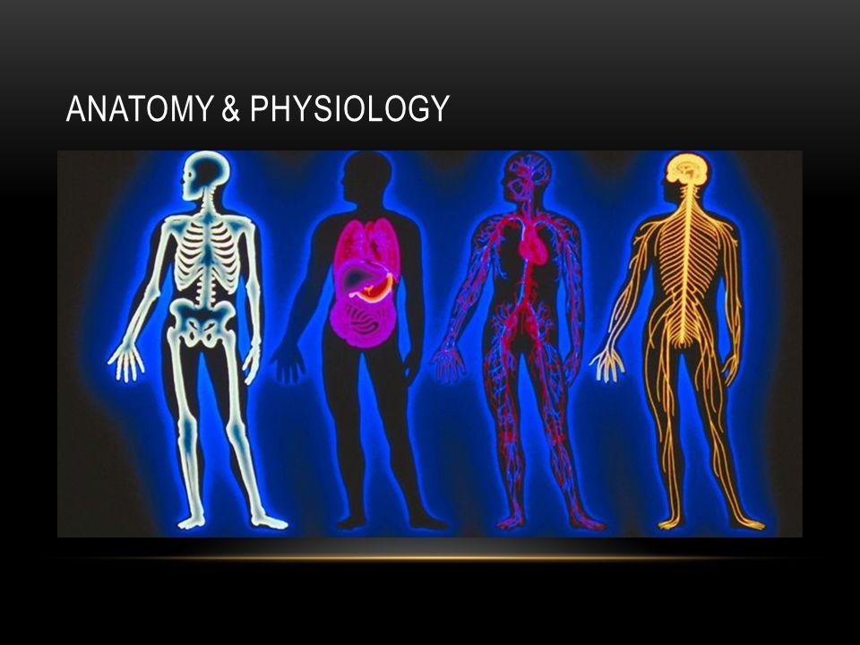 Human Anatomy Terminology - ppt video online download