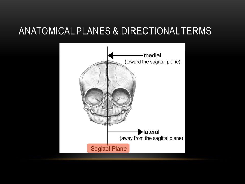 Human anatomy terminology