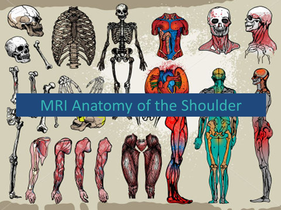 MRI Anatomy of the Shoulder - ppt video online download
