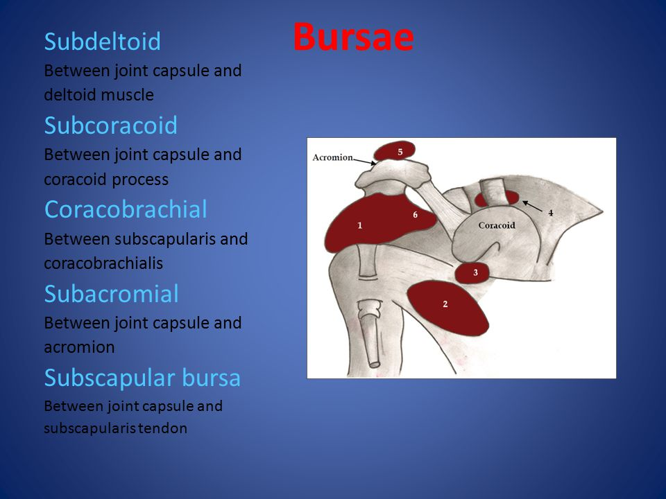 Mri Anatomy Of The Shoulder Ppt Video Online Download