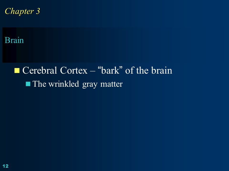 Cerebral Cortex – bark of the brain