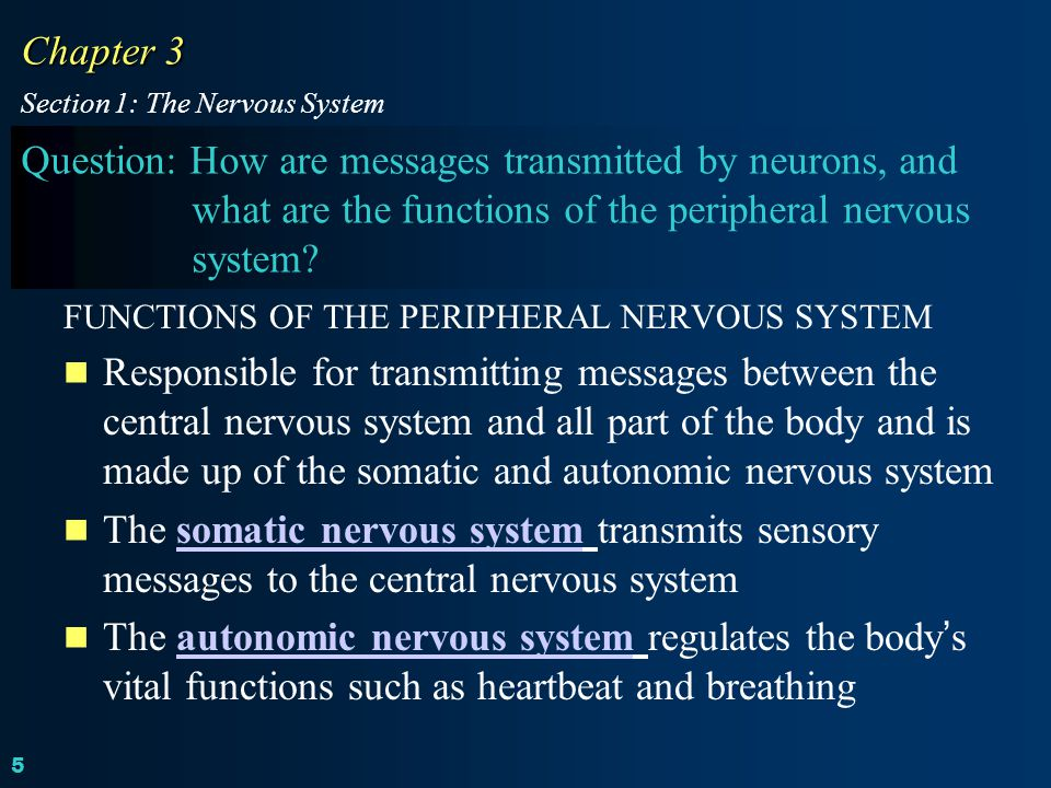 Chapter 3 Section 1: The Nervous System.
