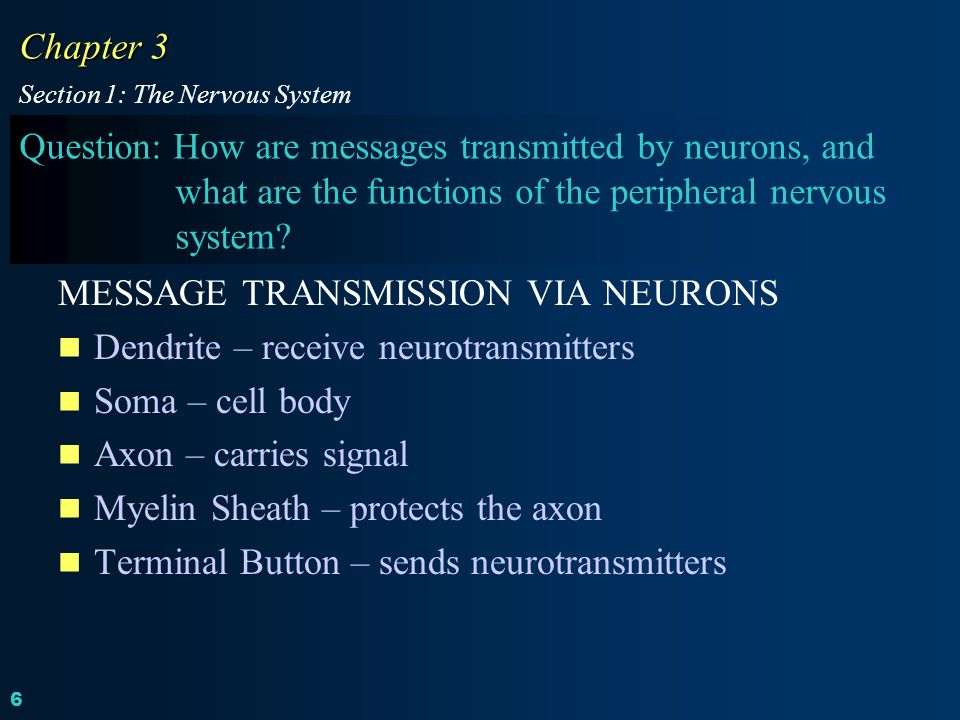 MESSAGE TRANSMISSION VIA NEURONS Dendrite – receive neurotransmitters