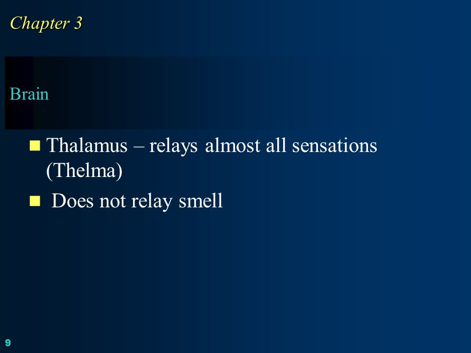 Thalamus – relays almost all sensations (Thelma) Does not relay smell