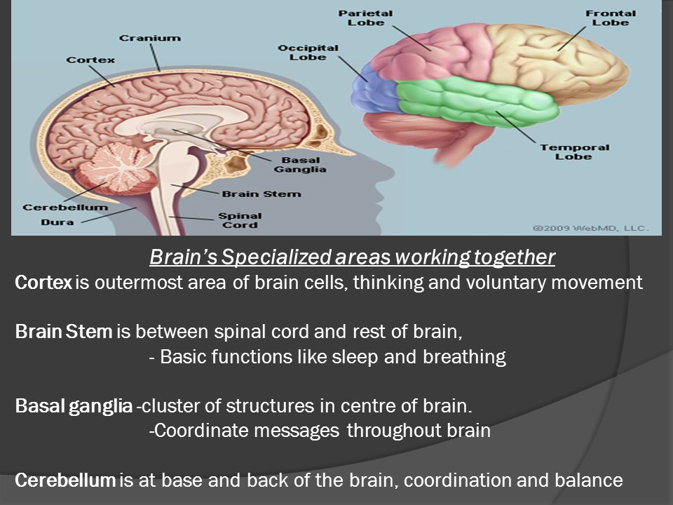 visual anomalies from brain injury and rehabilitation strategies ppt video online download. Black Bedroom Furniture Sets. Home Design Ideas