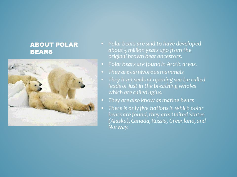 how the polar bear is affected That affects their health and their ability to make new pups: the number of polar  bears in the beaufort sea has already declined by 40 percent.