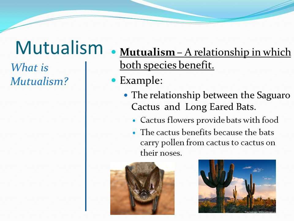 competition predation and mutualism relationship