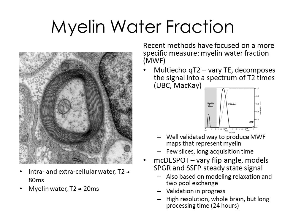 Whole Brain Myelin Imaging With Mcdespot In Multiple