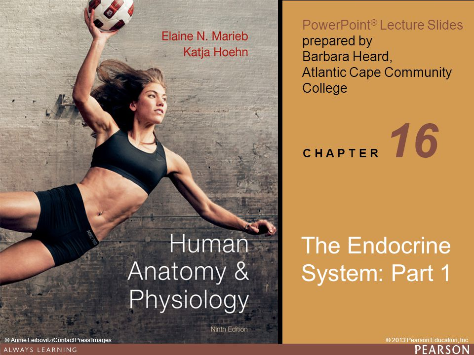 The Endocrine System: Part 1 - ppt video online download