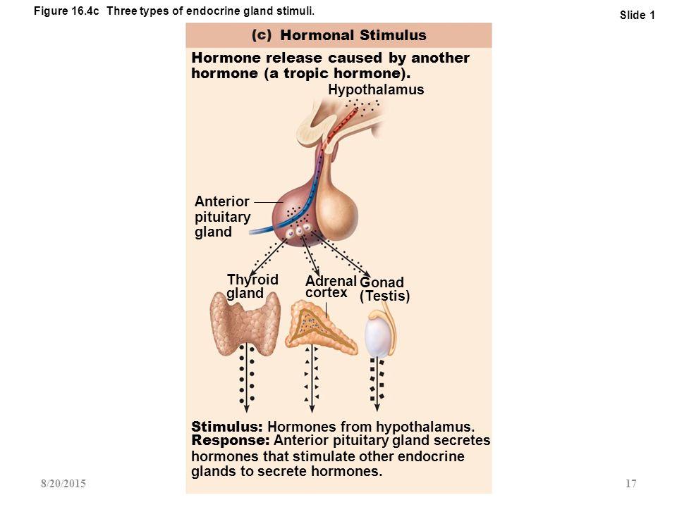 The Endocrine System: Part 1 - ppt video online download