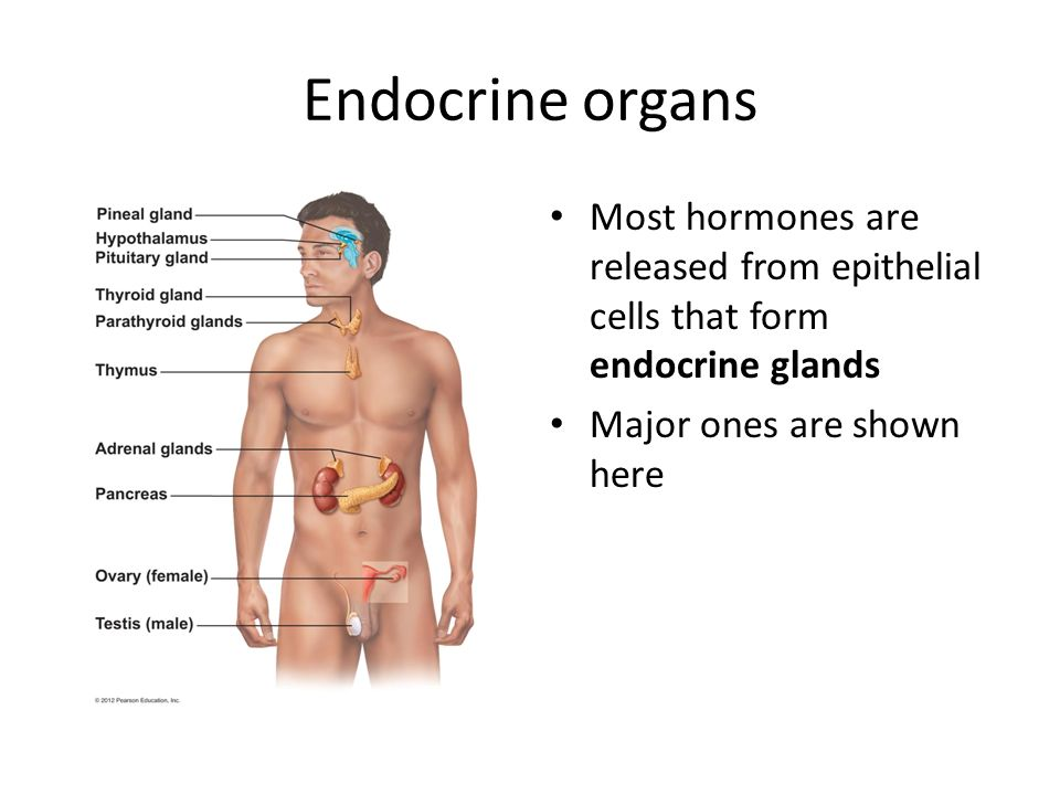 Chapter 9 The Endocrine System Ppt Video Online Download
