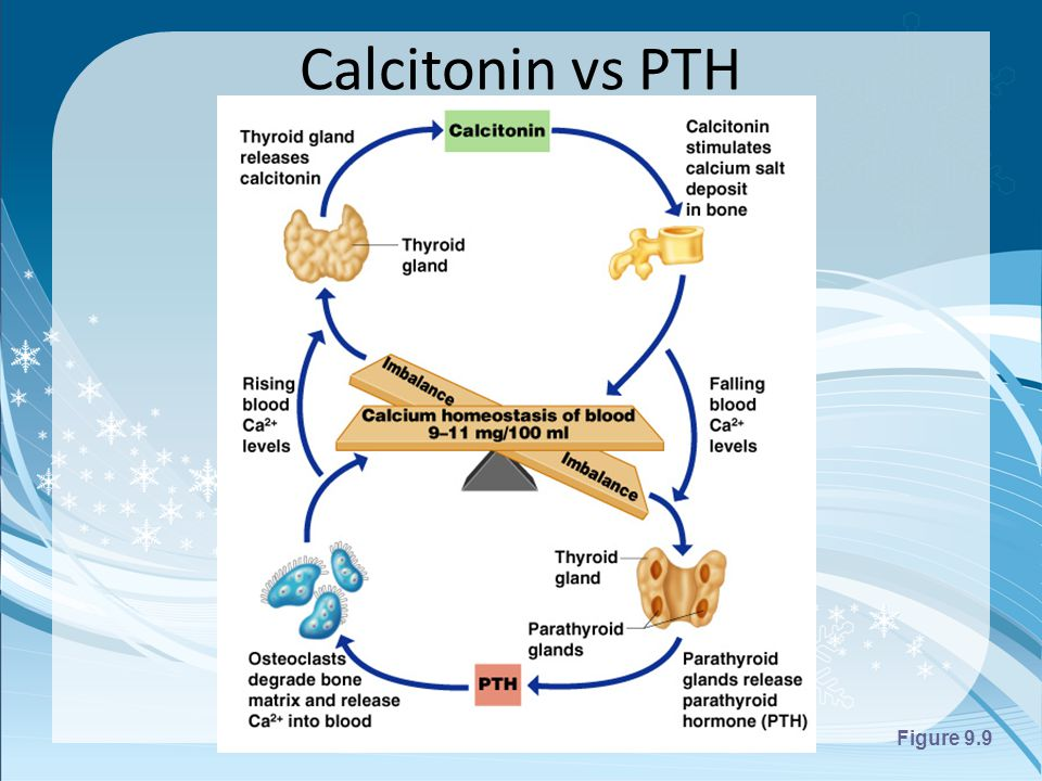 Calcitonin Reviews