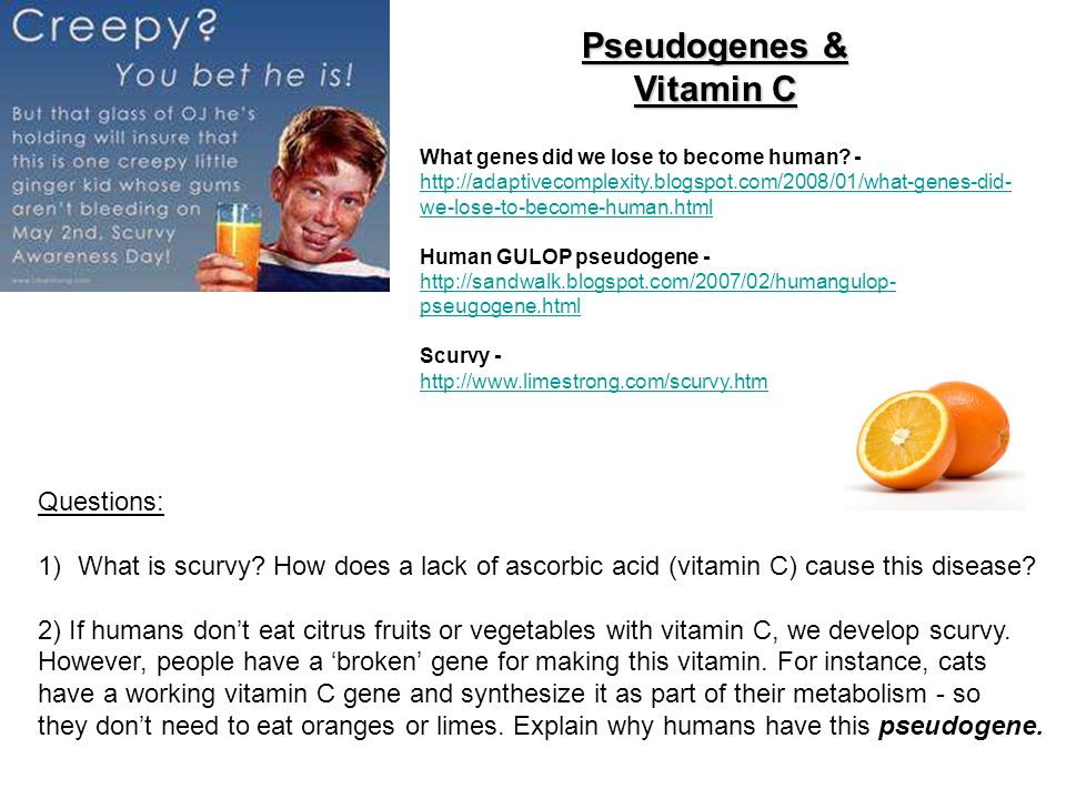 Making History With Vitamin C Powerpoint: Honors Project 2: The Human Variation Project Due: 3/ Ppt