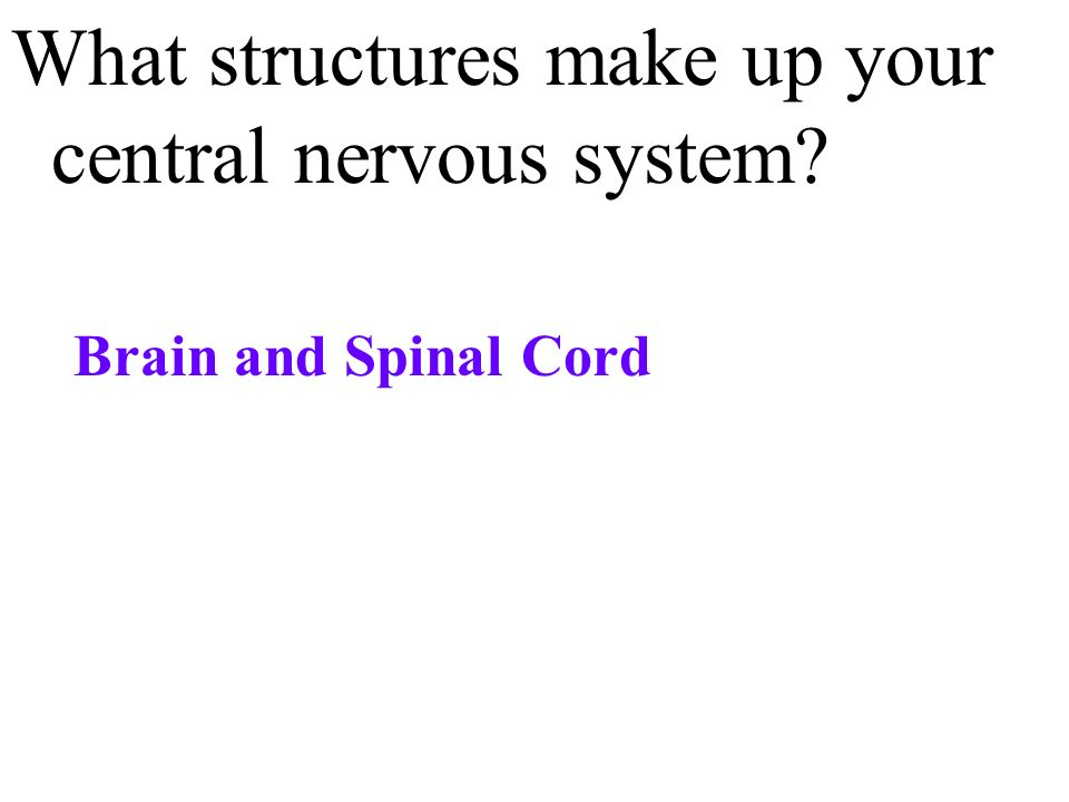 What structures make up your central nervous system