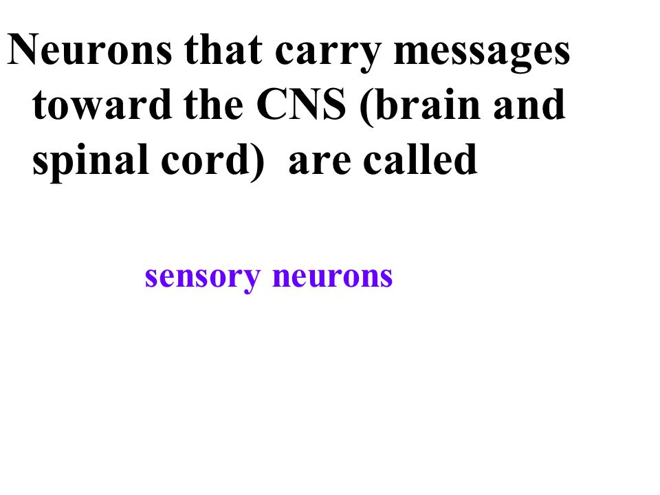 Neurons that carry messages toward the CNS (brain and spinal cord) are called