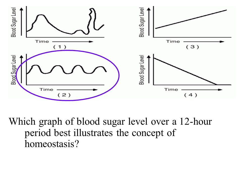 Which graph of blood sugar level over a 12-hour period best illustrates the concept of homeostasis