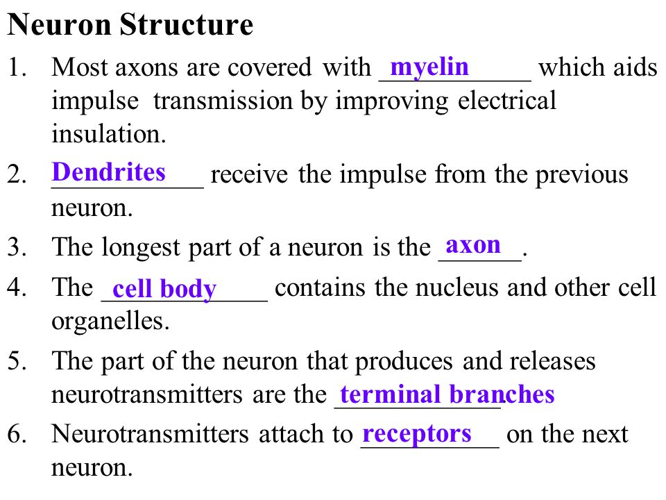 Neuron Structure Most axons are covered with ___________ which aids impulse transmission by improving electrical insulation.