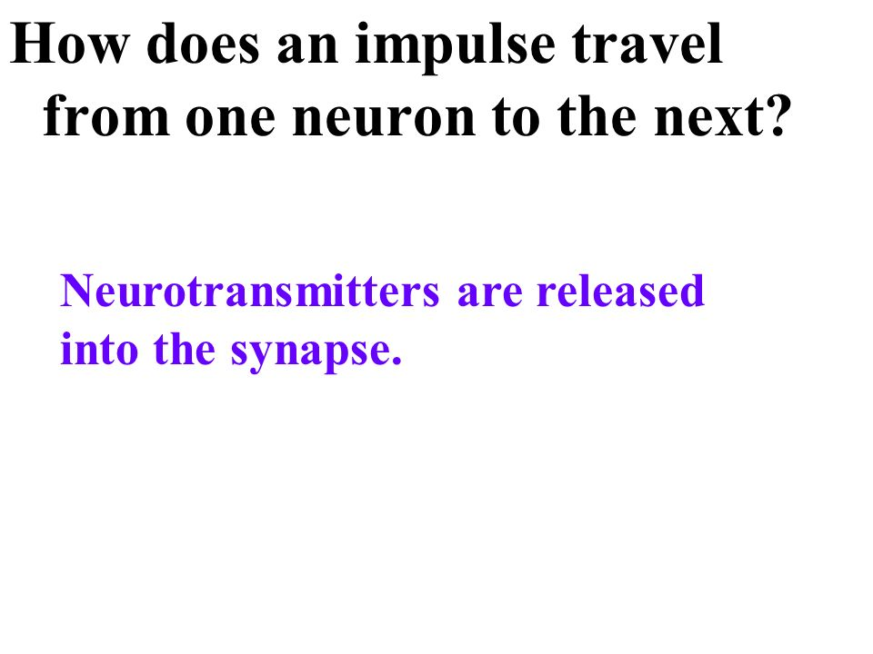 How does an impulse travel from one neuron to the next
