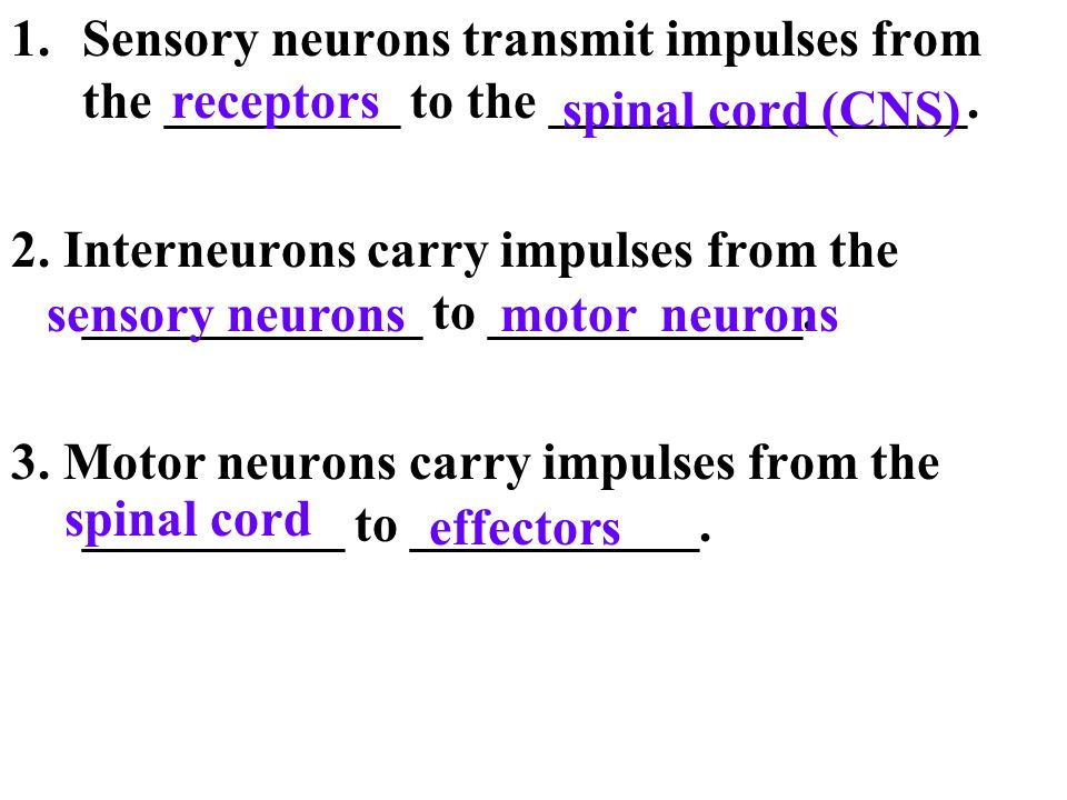 Sensory neurons transmit impulses from the _________ to the ________________.