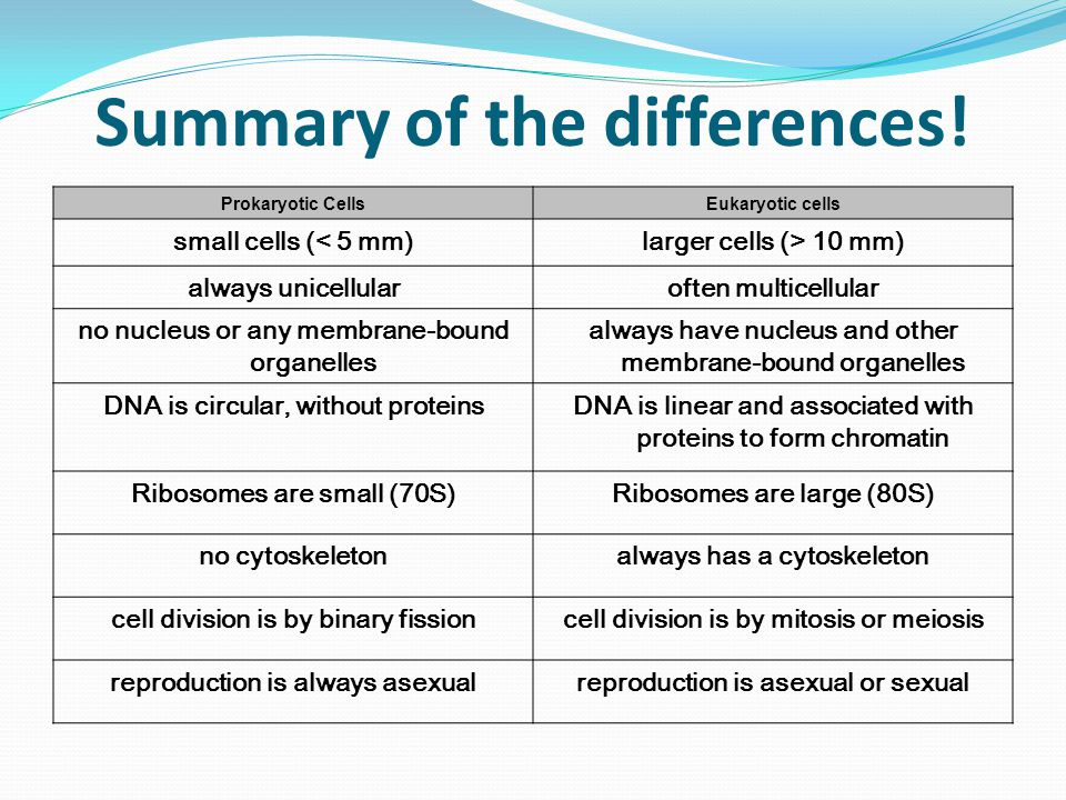 prokaryotic cell and eukaryotic cell pdf