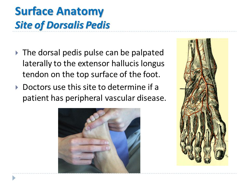Foot surface anatomy 5687555 - follow4more.info