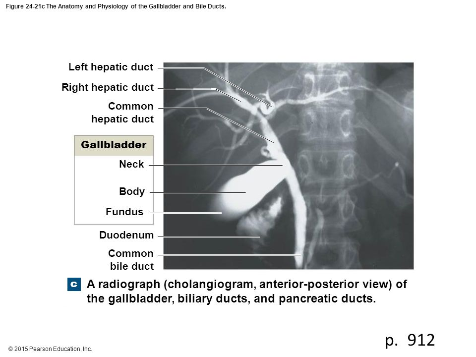 Anatomy of the gallbladder and bile ducts