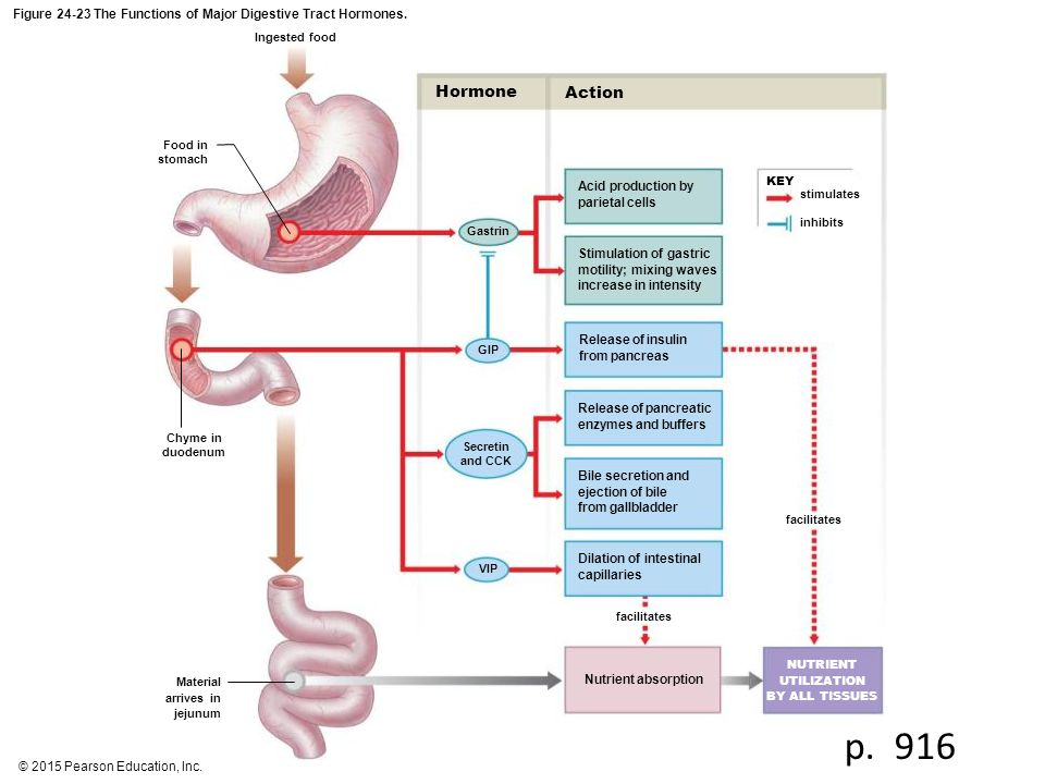 Figure The Functions of Major Digestive Tract Hormones.