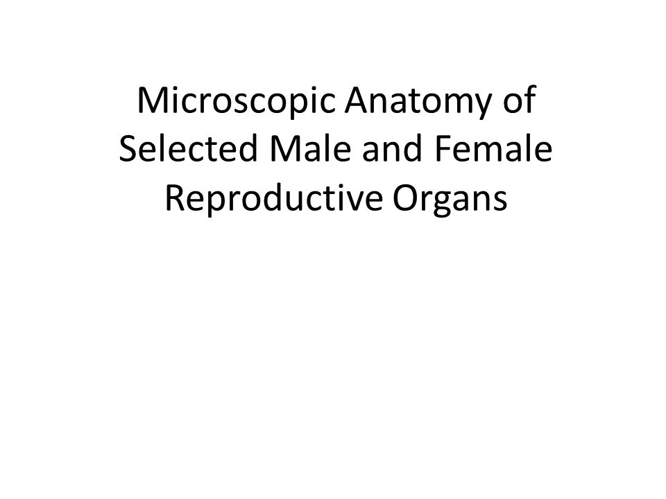 Microscopic Anatomy of Selected Male and Female Reproductive Organs ...