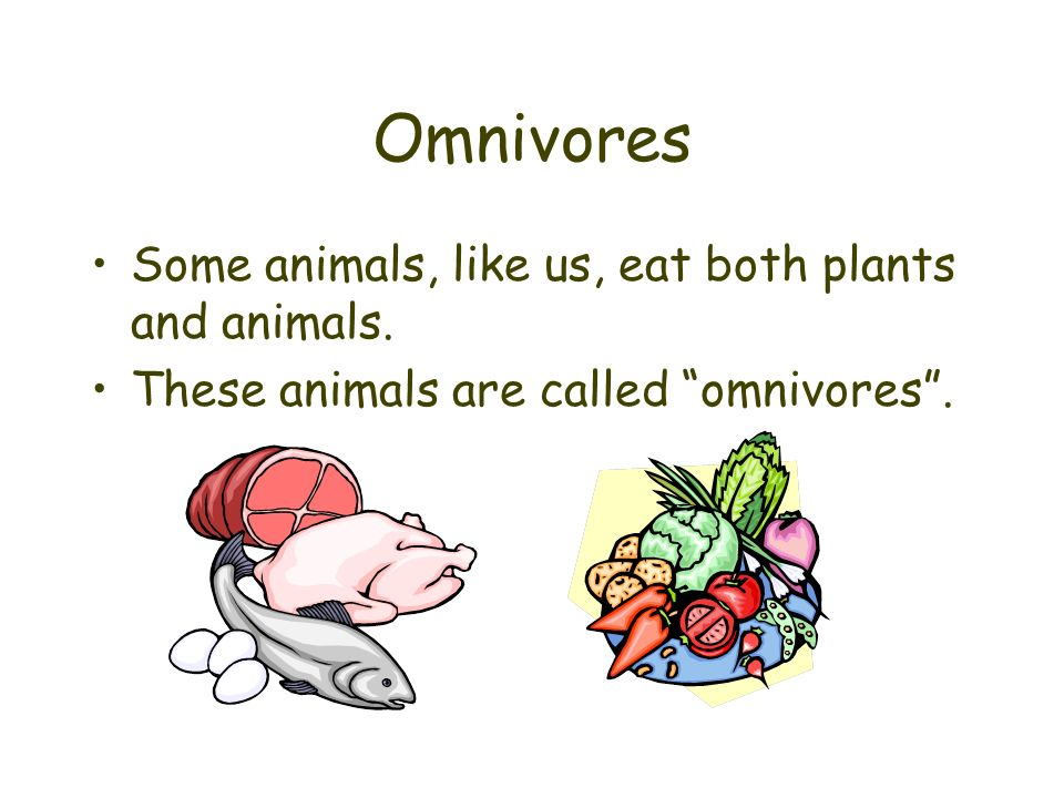 Omnivores Some animals, like us, eat both plants and animals.