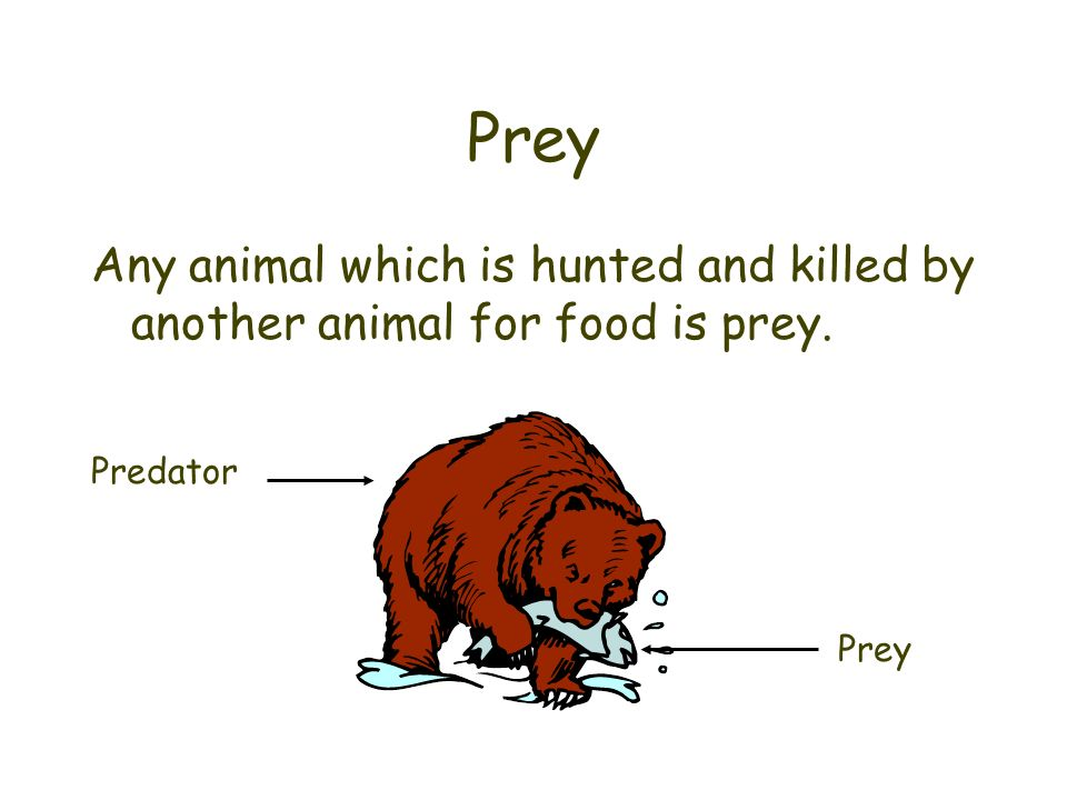 Prey Any animal which is hunted and killed by another animal for food is prey. Predator Prey