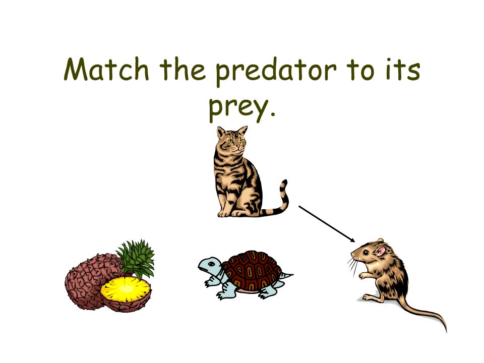 Match the predator to its prey.