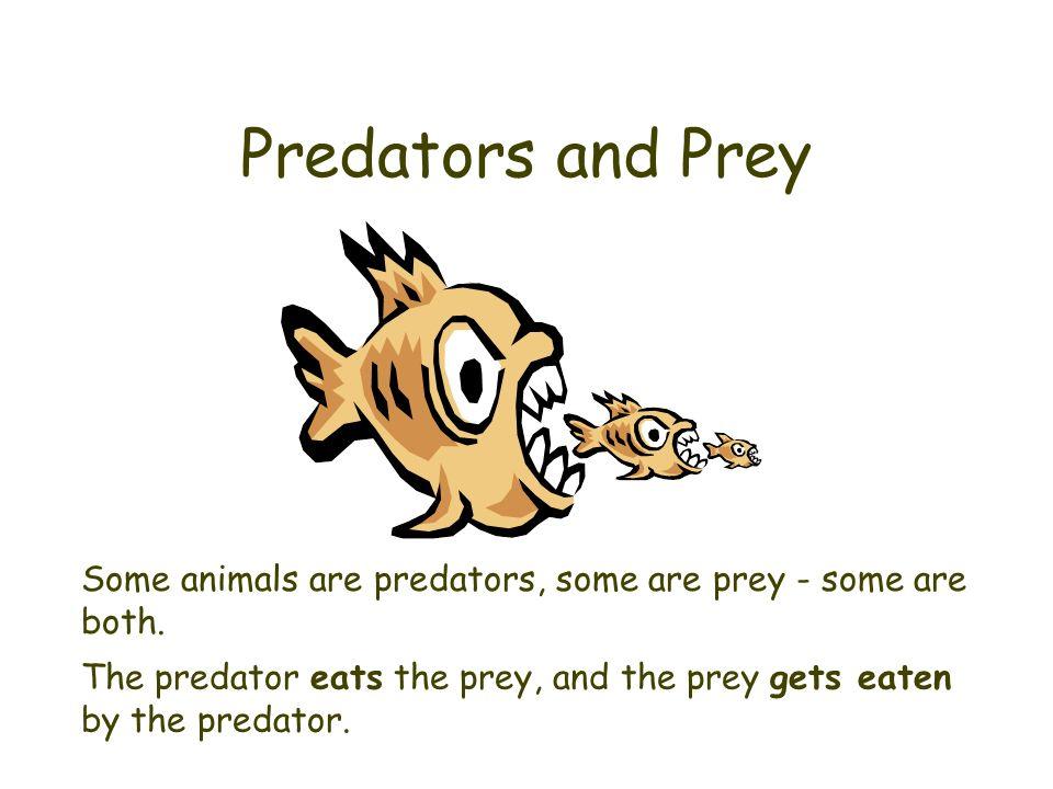 Predators and Prey Some animals are predators, some are prey - some are both.