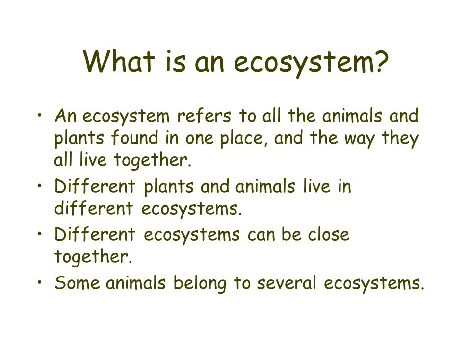 What is an ecosystem An ecosystem refers to all the animals and plants found in one place, and the way they all live together.