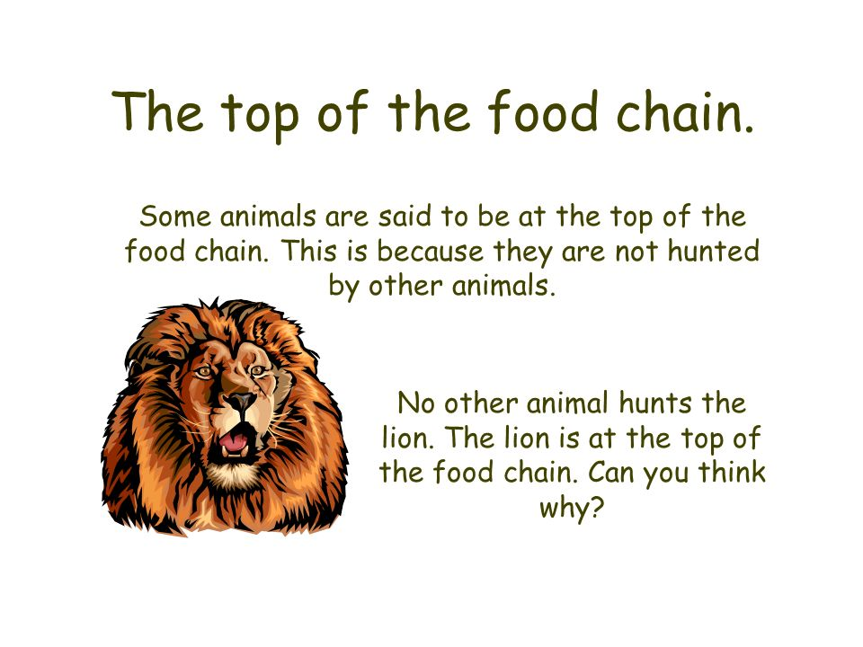 The top of the food chain.