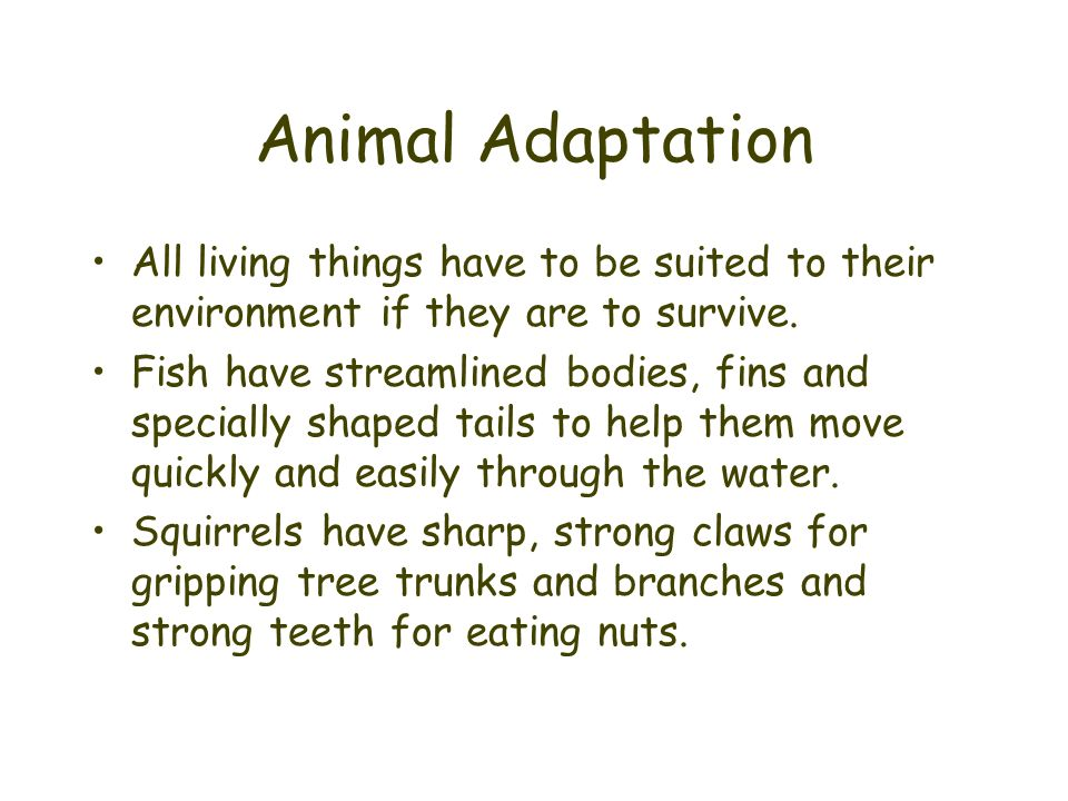 Animal Adaptation All living things have to be suited to their environment if they are to survive.