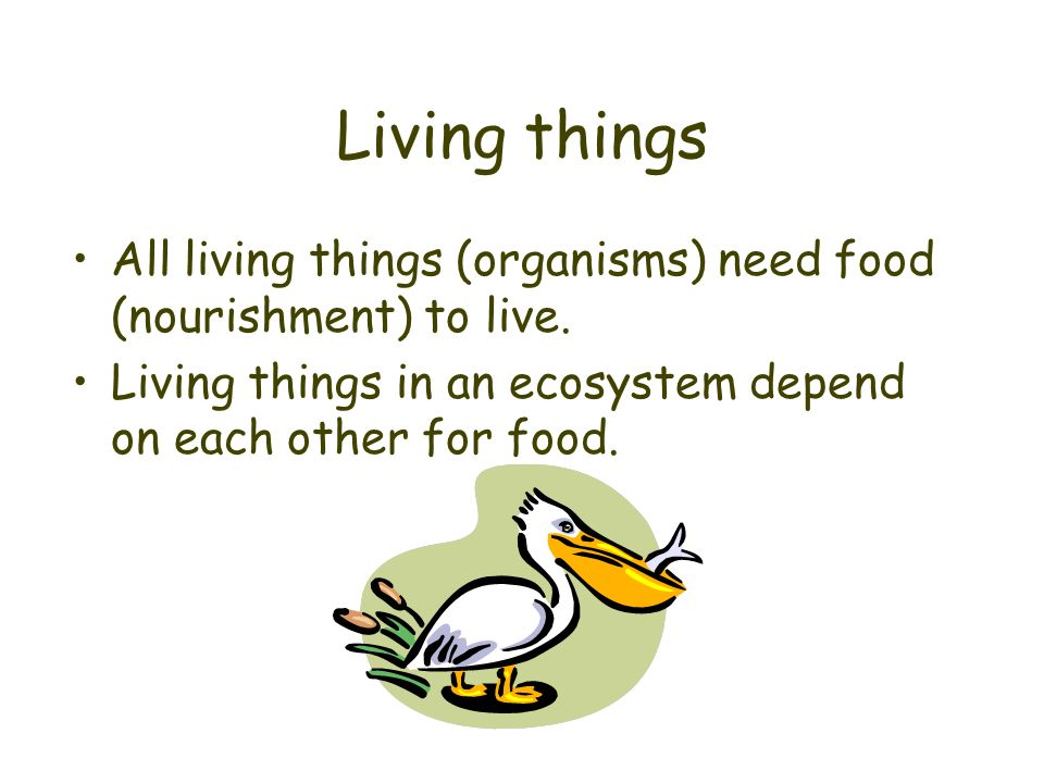 Living things All living things (organisms) need food (nourishment) to live.