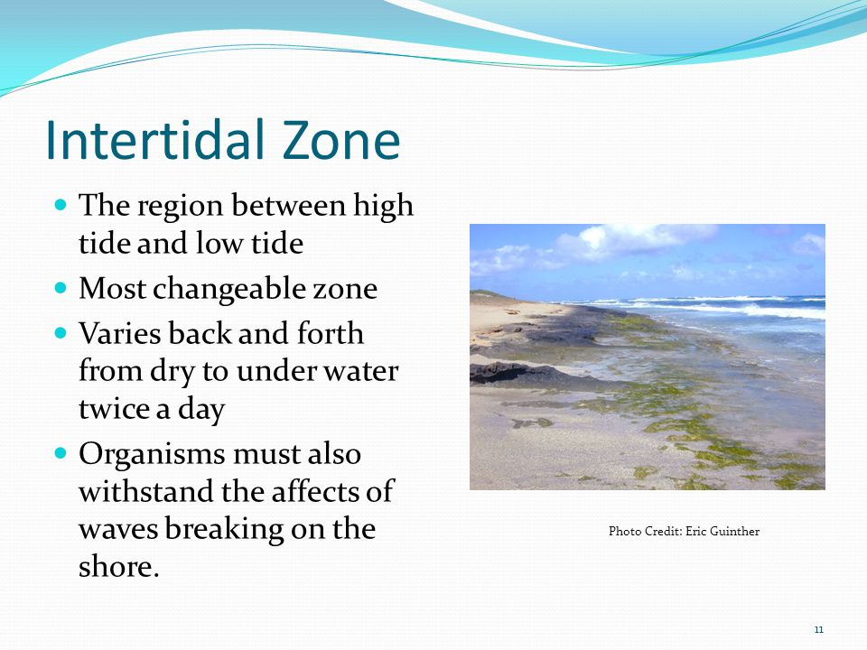 Intertidal Zone The region between high tide and low tide